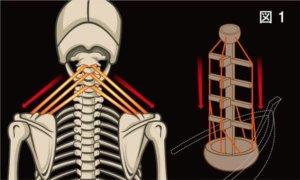 頸椎ヘルニアの治療について説明画像1